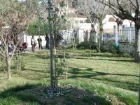 arbres Montflorit