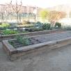 Un hort organitzat en parterres elevats
