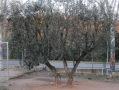 Les oliveres, la casa que acull els infants.