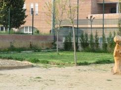 La preparació de zones amb diferents propostes per fer-hi vida. Podem plantar herba de camp? Com fer el manteniment?
