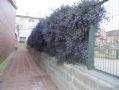 Enfiladisses que poden transformar els murs o les tanques creant un entorn natural.