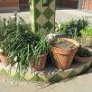 Les plantes creixen i...