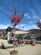 Col-legi d'educació Infantil i Primària Els Agols (100)