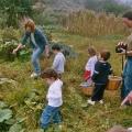 Collint carbasses a l'hort de Torrelles