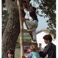 L'arbre de Torrellebreta (Vic)